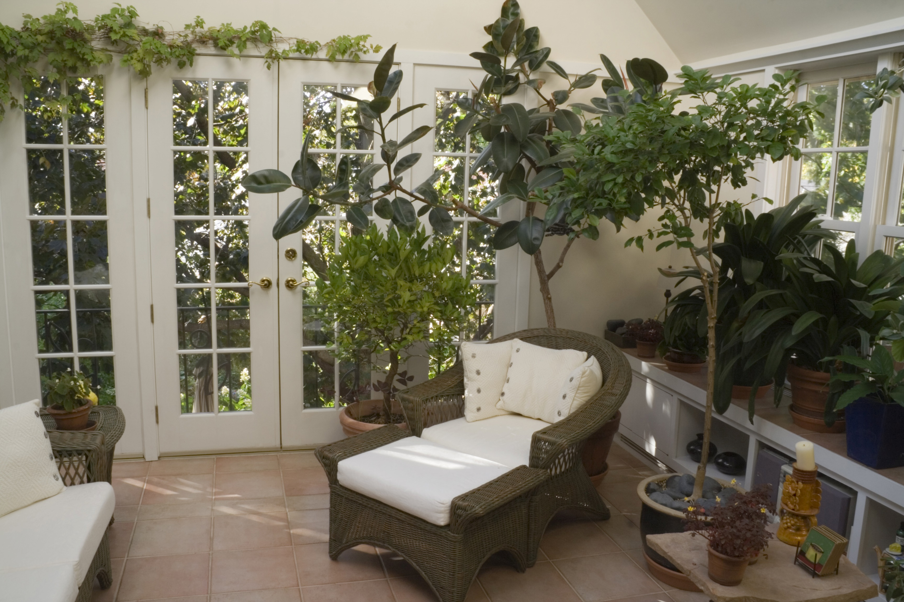 Interior Plant Design Sacramento Ca The Tropical Plant House