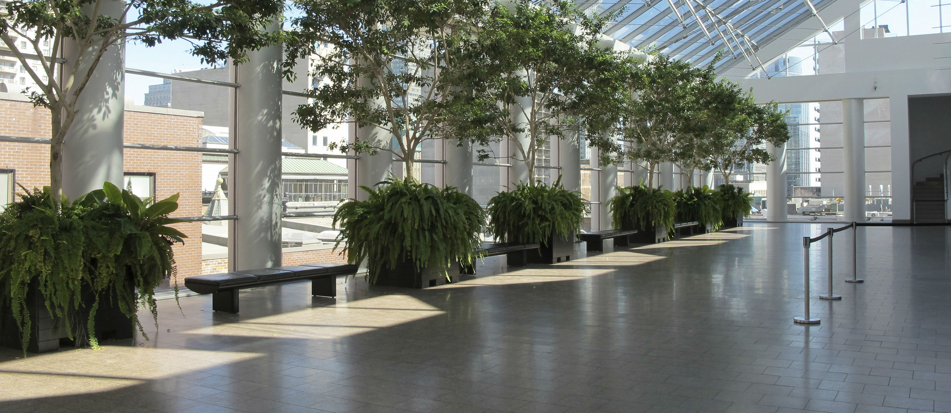 interior plant design | sacramento, ca | the tropical plant house